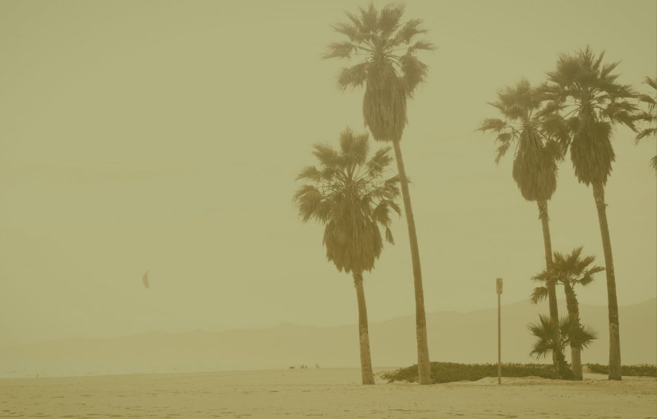 beach, three tall palm trees, olive overlay