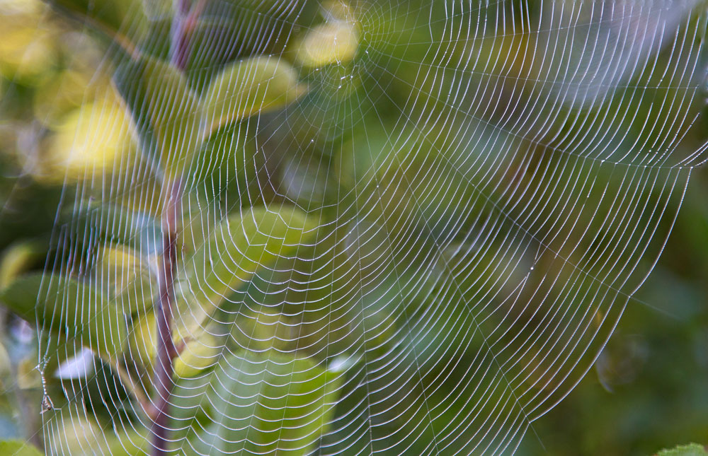 spiderweb with leafy background
