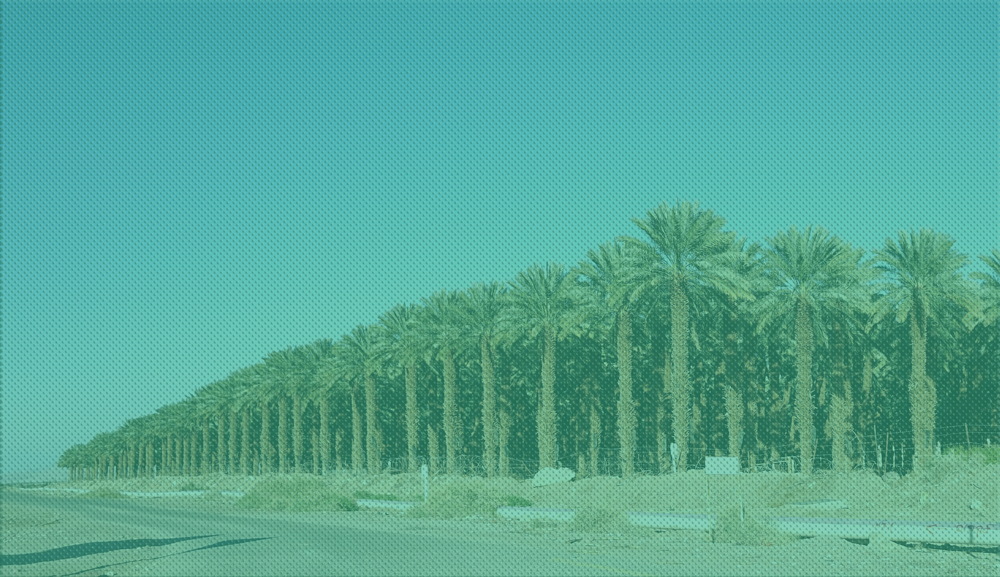 Farm of Palm Trees, blue sky in background