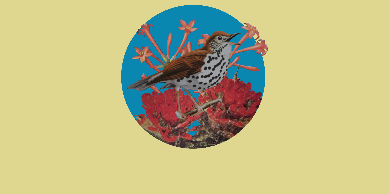 Bird inside collage