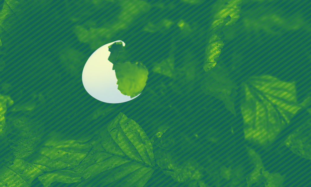 A close-up of green tree branches that partially cover a full moon.