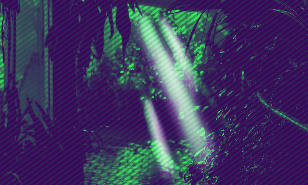 Light filtered through trees, stylized in dark purple and vibrant green